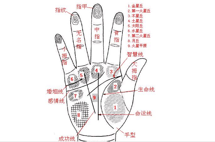 手相入门基础知识普及之:认识三纹五线及其作用2