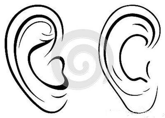 面相耳朵图解【最详细版】