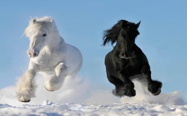 马儿快跑!
