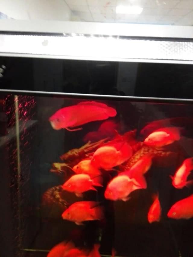 乙未年庚辰月丙子日记:养鱼悟到的人生哲学12