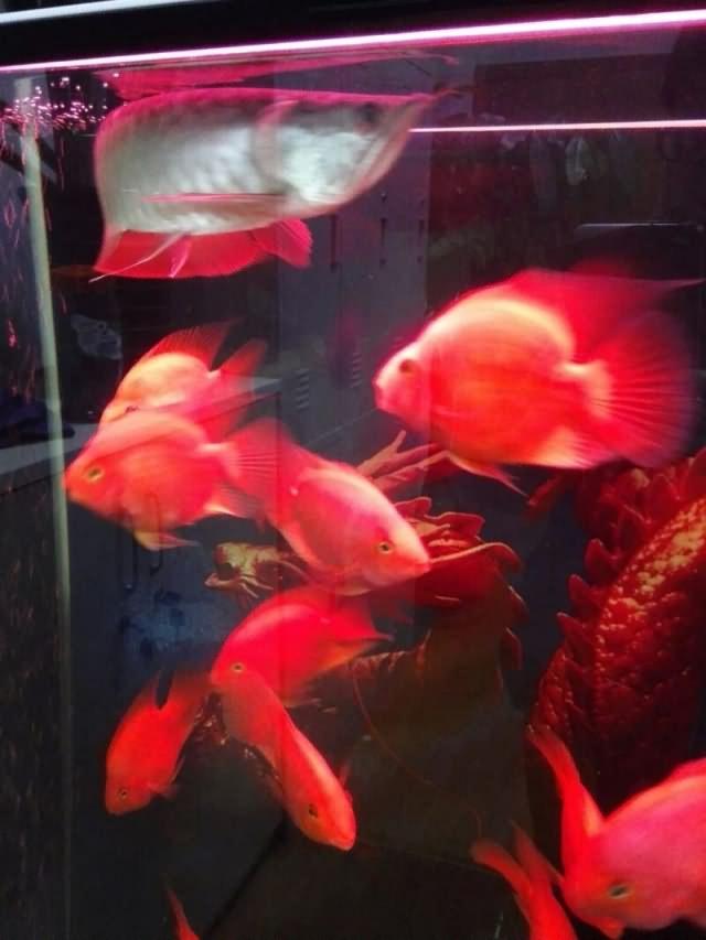 乙未年庚辰月丙子日记:养鱼悟到的人生哲学13