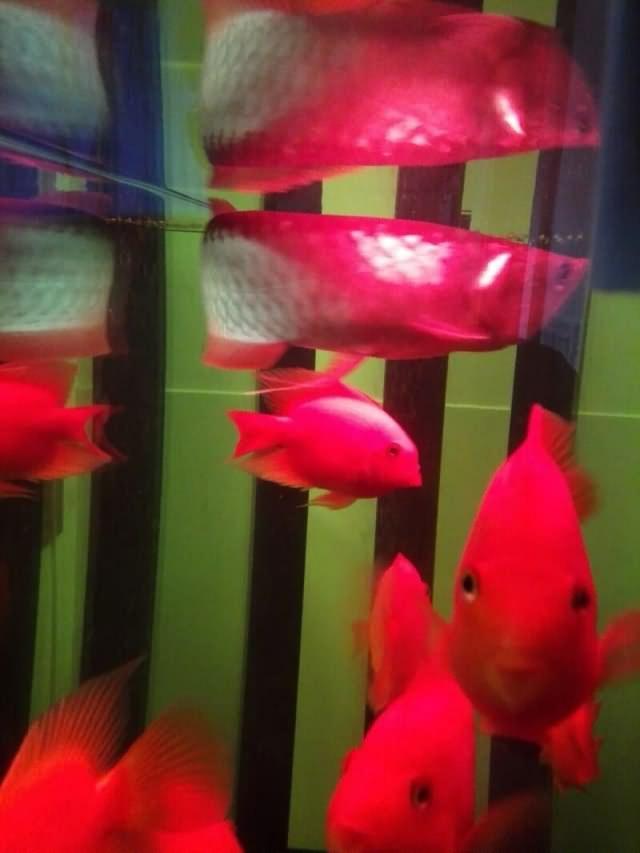 乙未年庚辰月丙子日记:养鱼悟到的人生哲学15