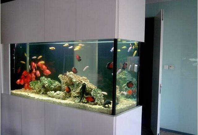 鱼缸在风水中的摆放位置5